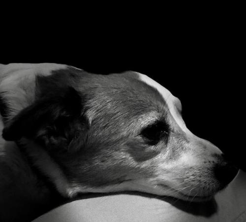 sweet old jrt